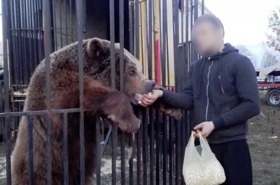 Niedźwiedź Baloo