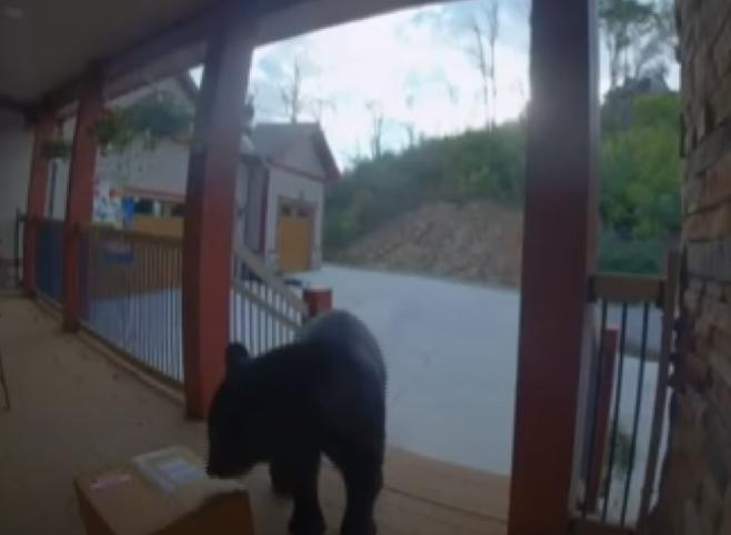 Niedźwiedź złodziej